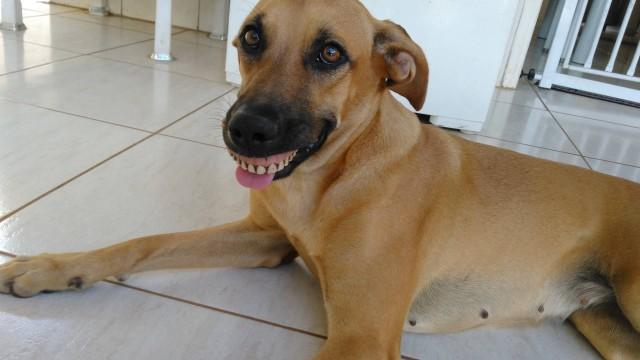 Cachorrinha acha dentadura em quintal de casa e foto faz