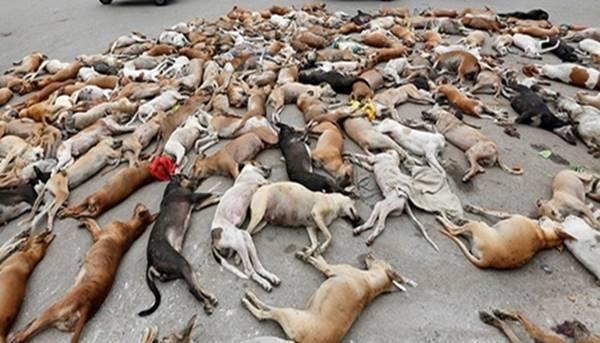 Mais de mil cães de rua foram envenenados por funcionários da prefeitura de Karachi depois de denúncia de que os cachorros haviam mordido crianças e mulheres.